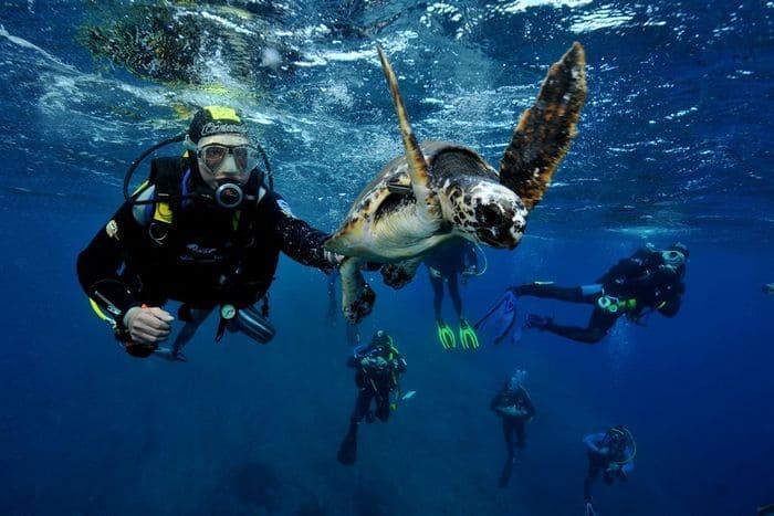 plongée tortue guadeloupe